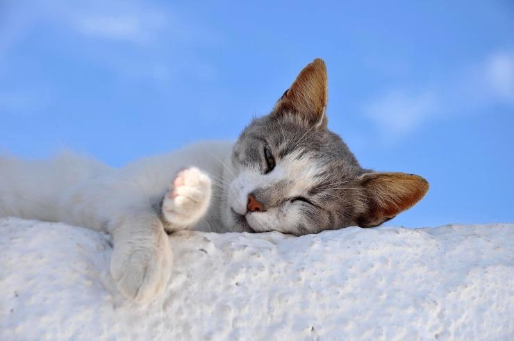 cat-2116472_1920