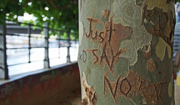 tree-bark-1209874_1920